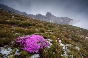 """ghj 1. Platz im bayernweiten Fotowettbewerb """"Natur im Fokus"""" 2014"""