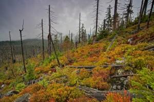 Von wegen toter Wald
