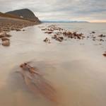 Ebbe. Kelpwälder and der Küste, das Björndalen ist oben links zu sehen