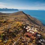 Aussicht auf den Isfjorden, in dem auch Longyearbyen liegt
