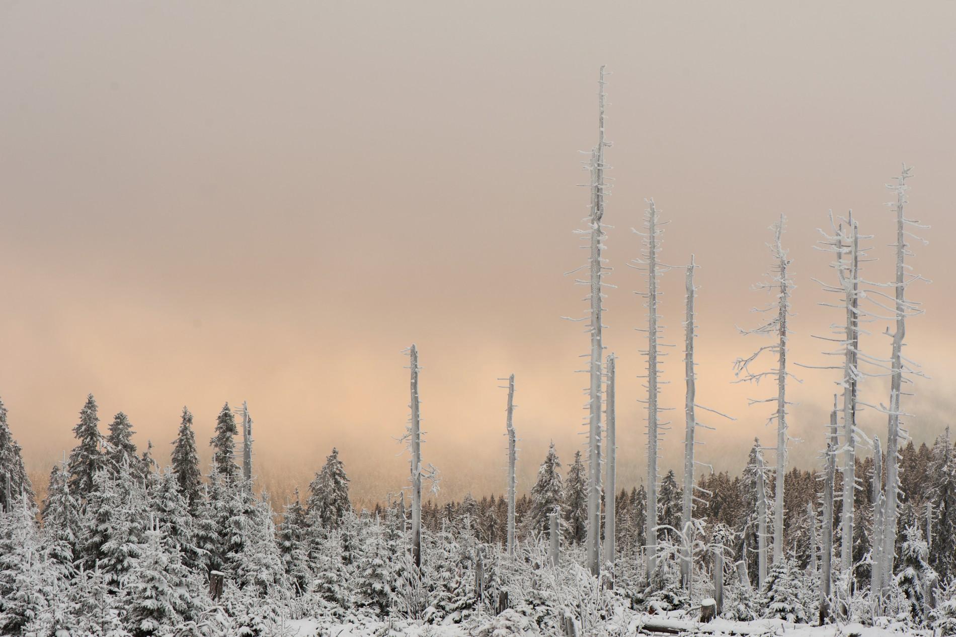 Bäume mit Eisüberzug