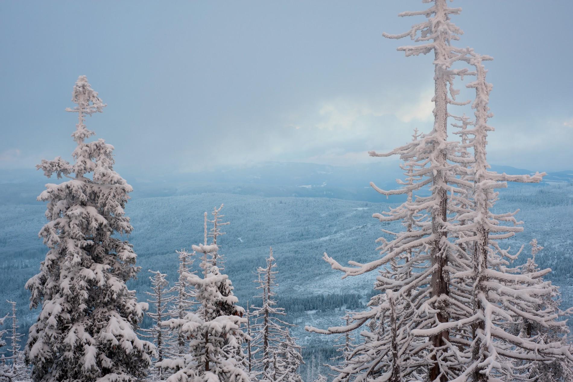 Blaue Winterkälte