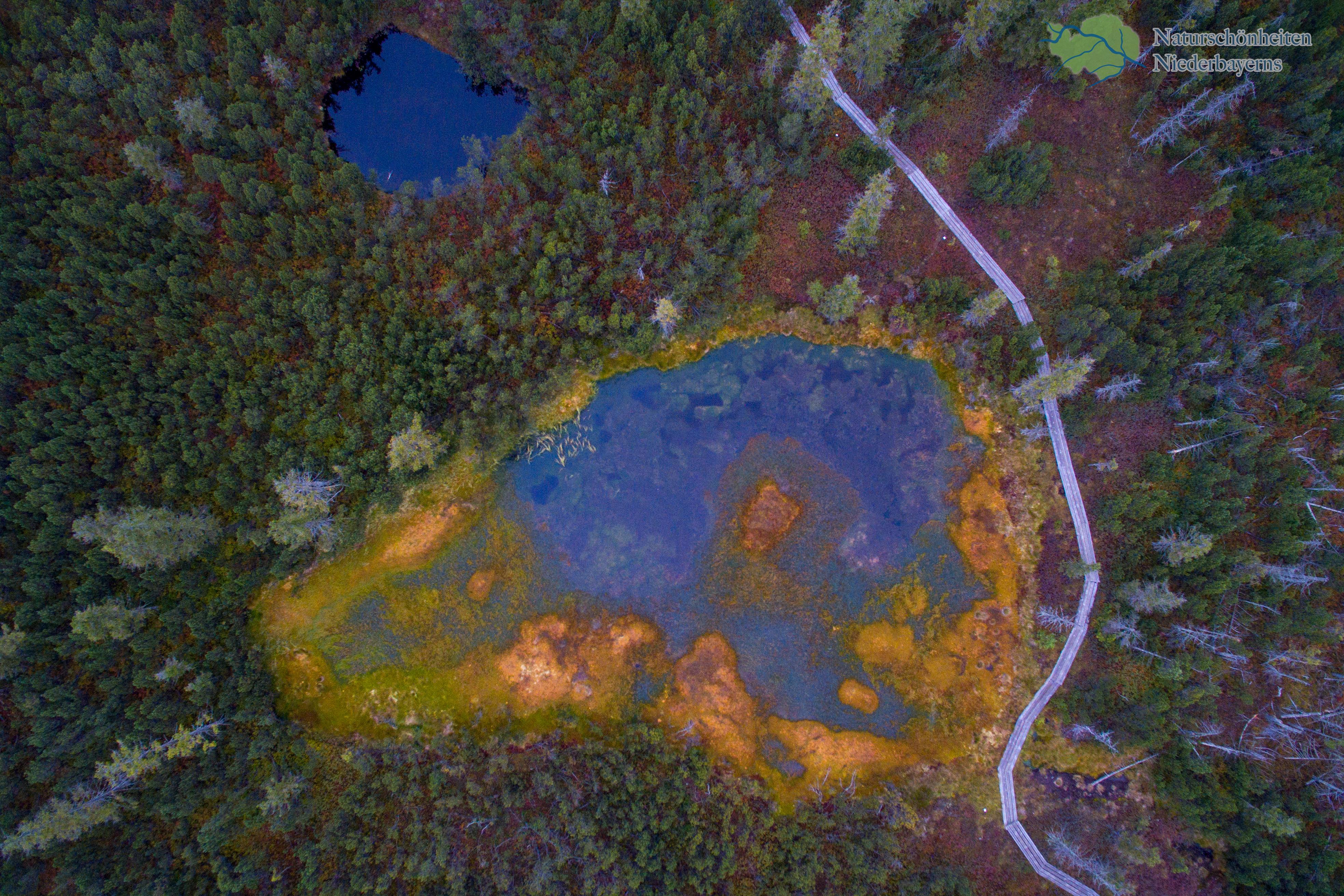 Yellowstone? Nein, Hochmoor im NP Bayerischer Wald